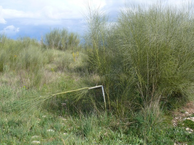David Bestué - ángulo recto en arbusto