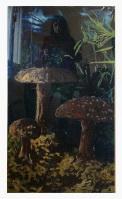 (2)hongos