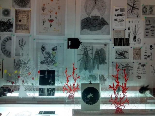 Micrografía o el espejo de la naturaleza-Pablo Lapadula-19